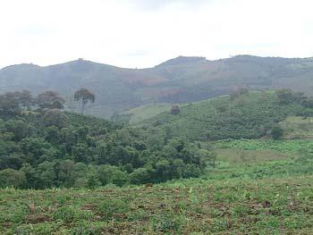 ジャカランダ農場遠景