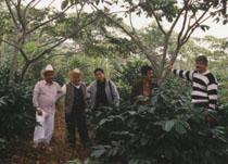 メキシコ・プエブラ州の有機コーヒー園