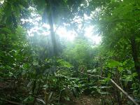 森林農法:高木から低木までいろいろな樹が育つ農園