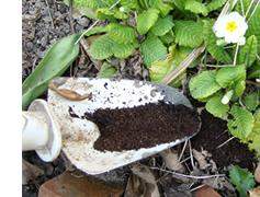 コーヒーかすを堆肥として利用できます。
