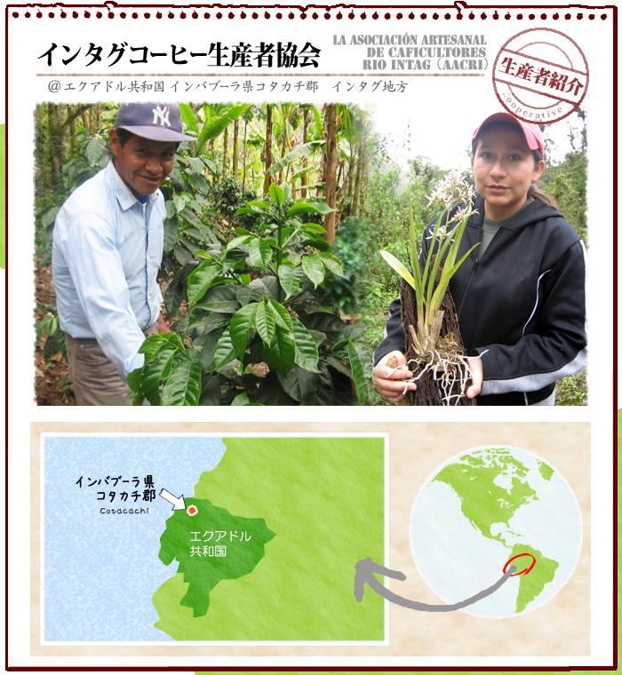 フェアトレード・オーガニック・コーヒーの産地紹介:エクアドル・インタグコーヒー生産者協会(AACRI)