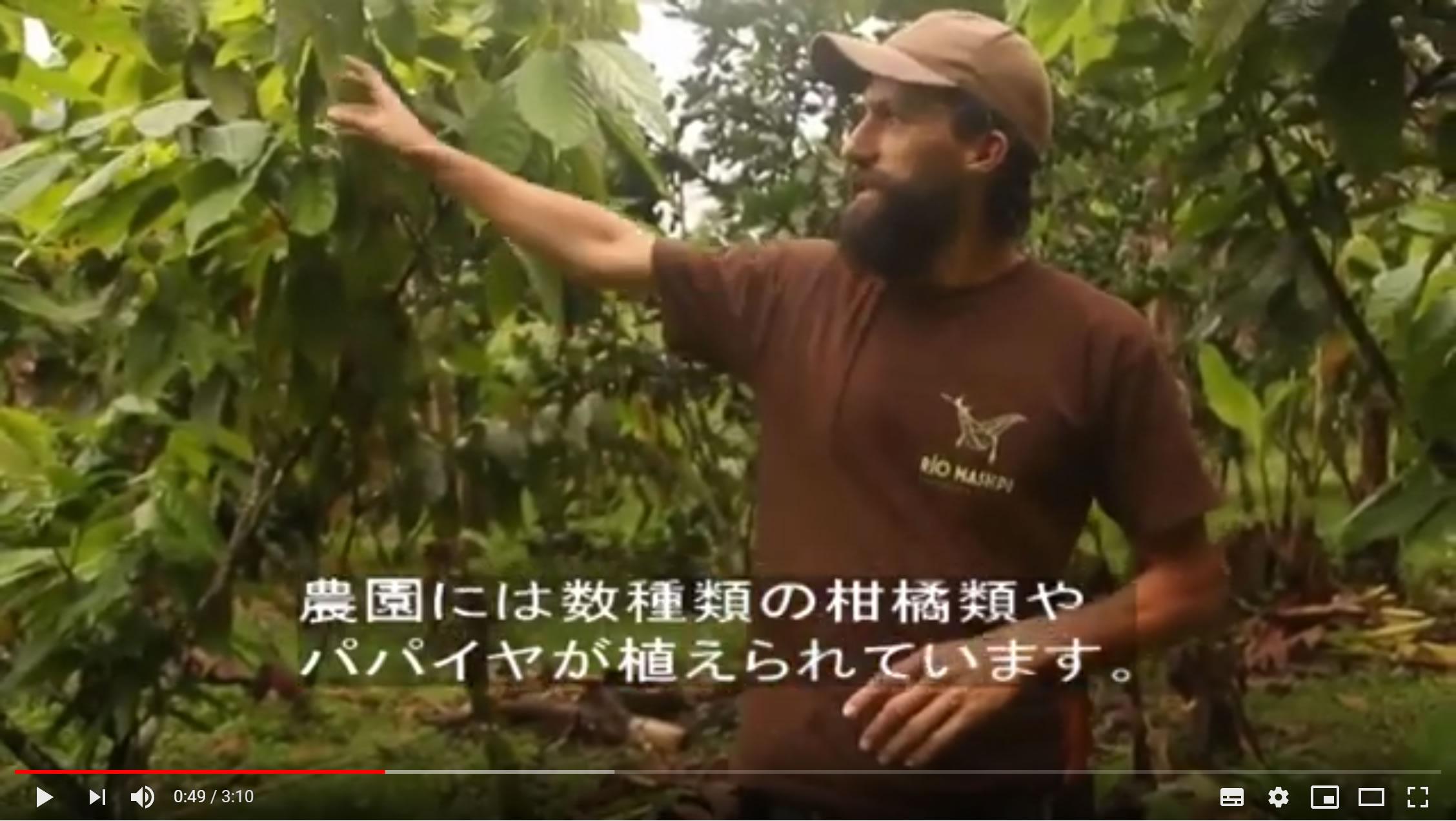 フェアトレード・オーガニック・森林農法のチョコレート生産者「マシュピ農園」の紹介映像