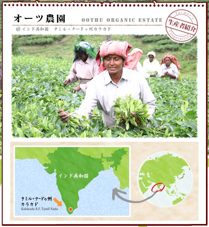 フェアトレード・オーガニック紅茶の産地紹介:南インド・オーツ農園