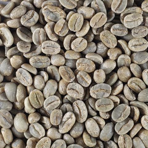 無農薬栽培コーヒー生豆 ガラパゴス産 【ガラパゴスコーヒー生産者組合】