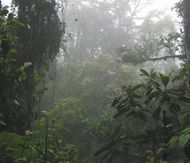 misty-forest_mini.jpg