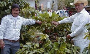 コーヒーの樹と生産者.jpg