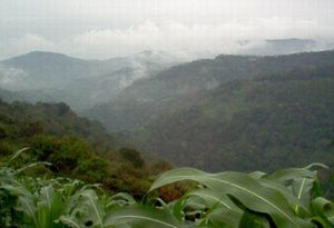 プエブラ州の雲霧林.jpg