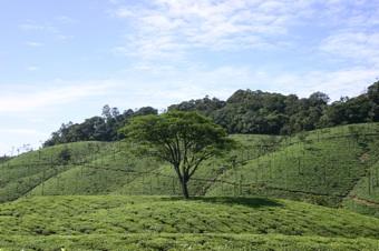 oothu_farmtree