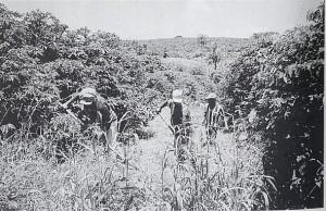 コーヒーの有機栽培に欠かせない草刈り作業