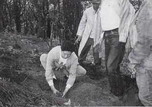 ジャカランダの樹を植える