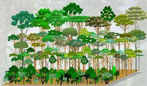 agroforest_p_m