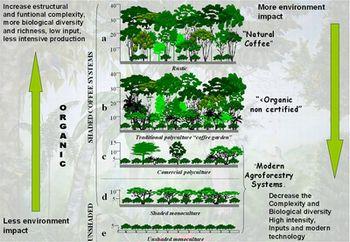 chaingingforest