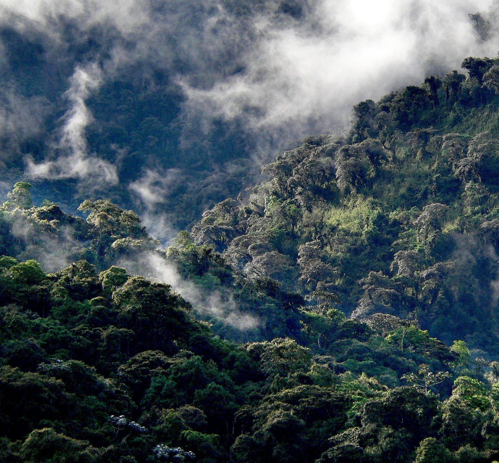 インタグの雲霧林