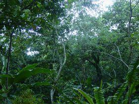 アグロフォレストリーの森