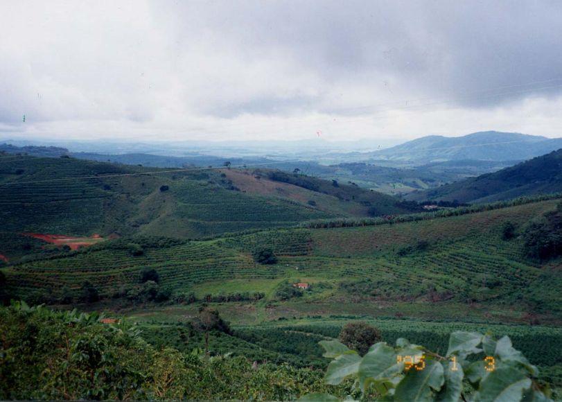 ジャカランダ農場の遠景