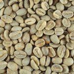 有機栽培コーヒー生豆 東ティモール産【COCAMAU(マウベシコーヒー生産者組合)】