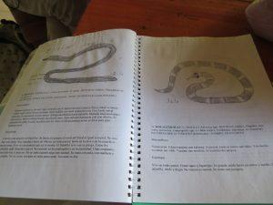 ナワット語の教材
