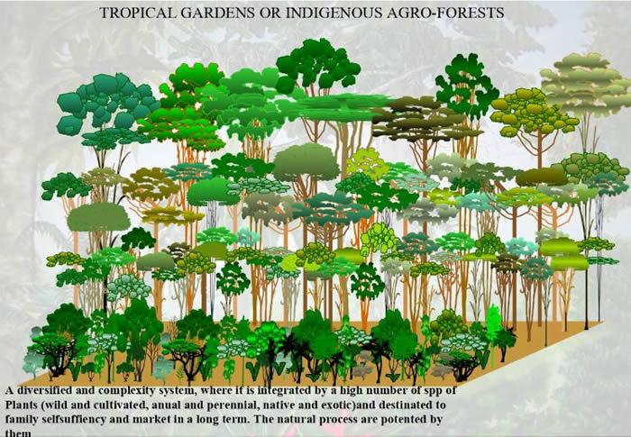 森林農法(アグロフォレストリー)の模式図