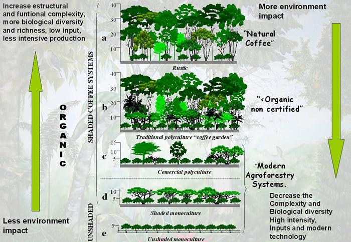 森林農法(アグロフォレストリー)の模式図 コーヒーに日陰を作るシステム