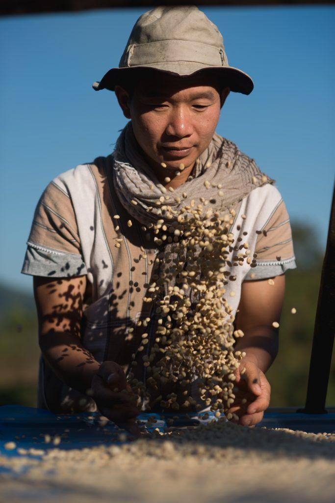コーヒーの生豆を選別するスウェさん