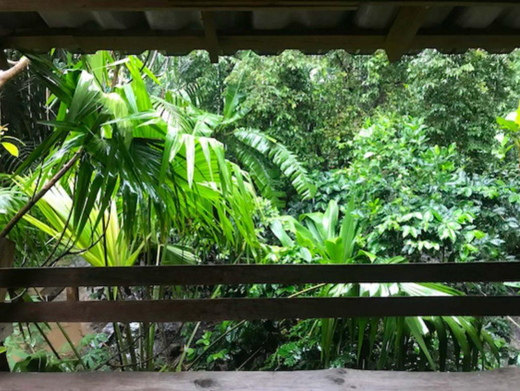 80種に及ぶ作物が植えられているジャングルのような庭